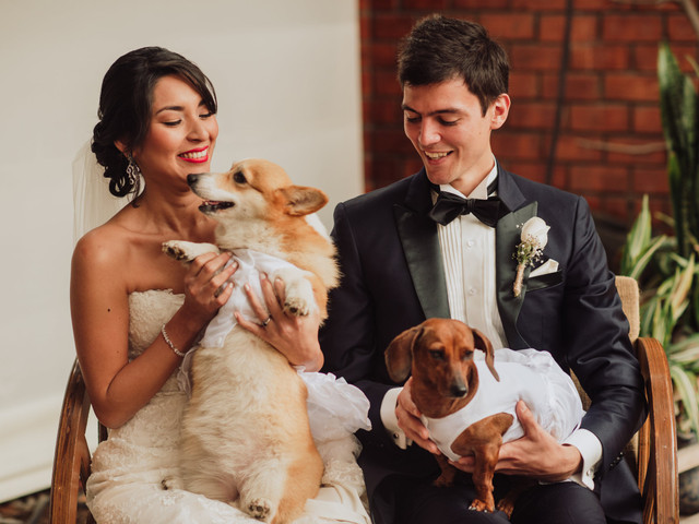 Su mascota en su nueva vida de casados: reglas de convivencia