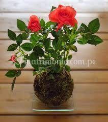 Koke rosas
