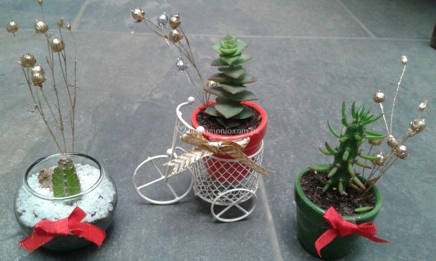 Plantitas navideñas