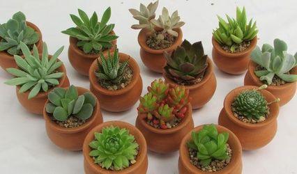 Haru - Suculentas & Cactus 1