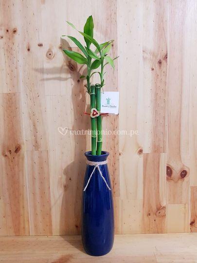 Bambú y Detalles