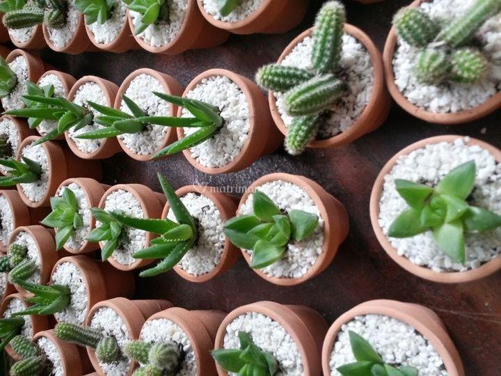 Plantitas.