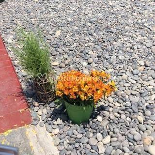 Arreglo floral para playa