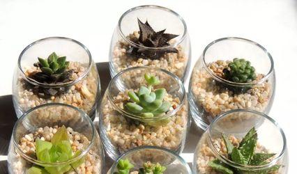 Cactus y Recuerdos