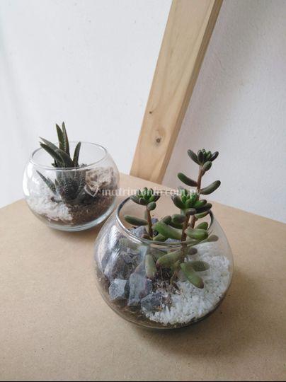 Mini terrario de vidrio