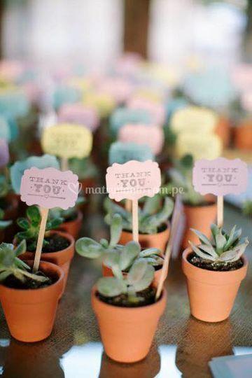 Plantitas decorativas