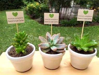 Succulent gift for Tipos de suculentas y sus nombres