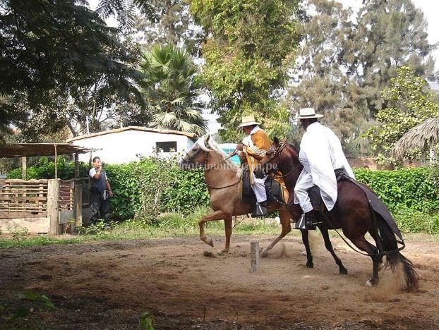 Exhibición caballos
