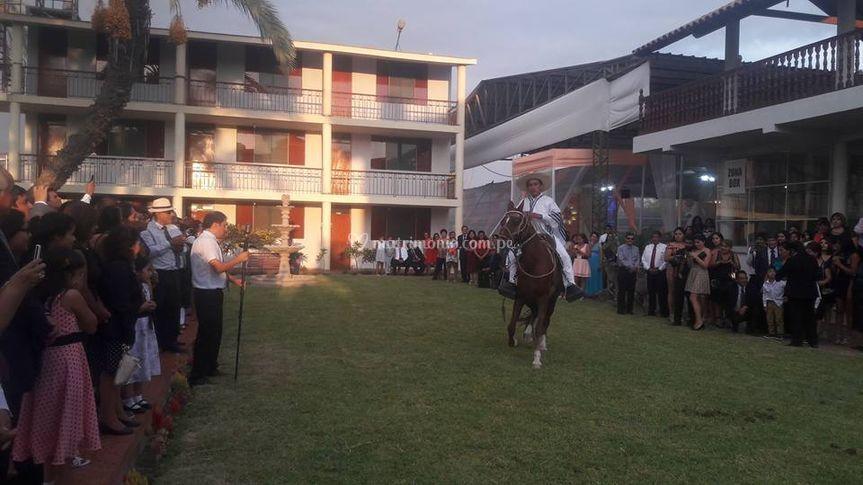 Exhibición de caballos de paso