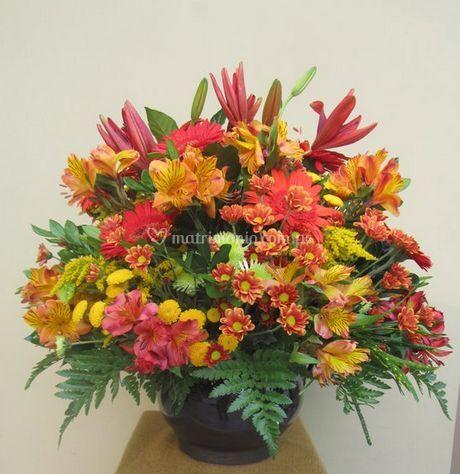 Flores llenas de color