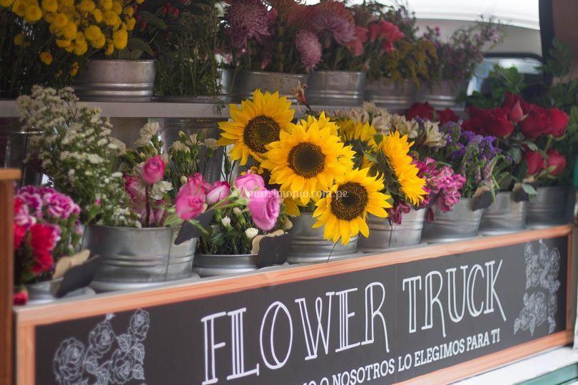 Elijan sus flores favoritas