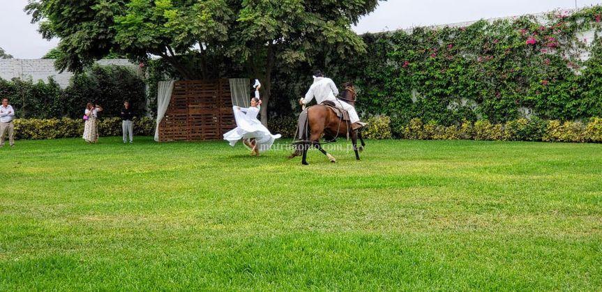 Baile de marinera y caballo