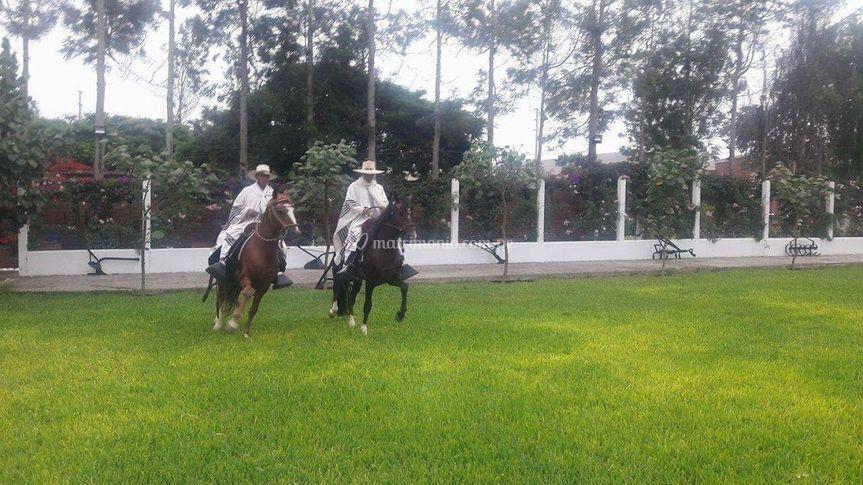 Sus caballos de paso