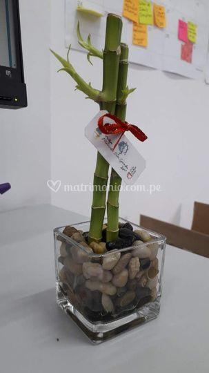 Bambú enano