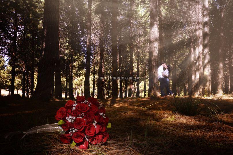 Pre boda pinos