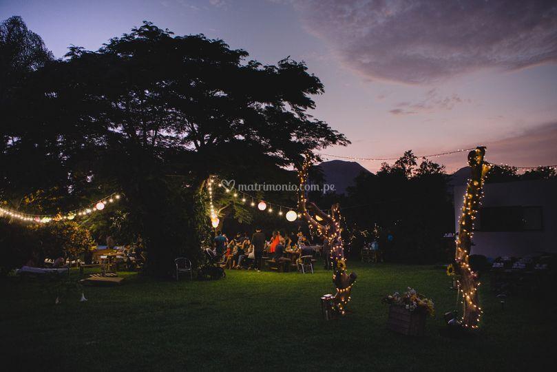 Árboles y luces