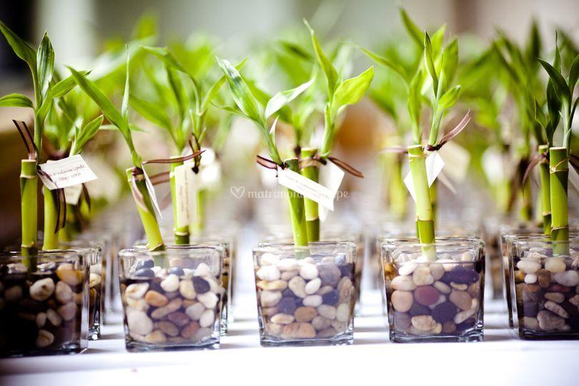 Bambus en vidrio