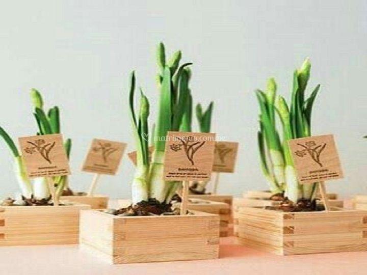Bambús en madera