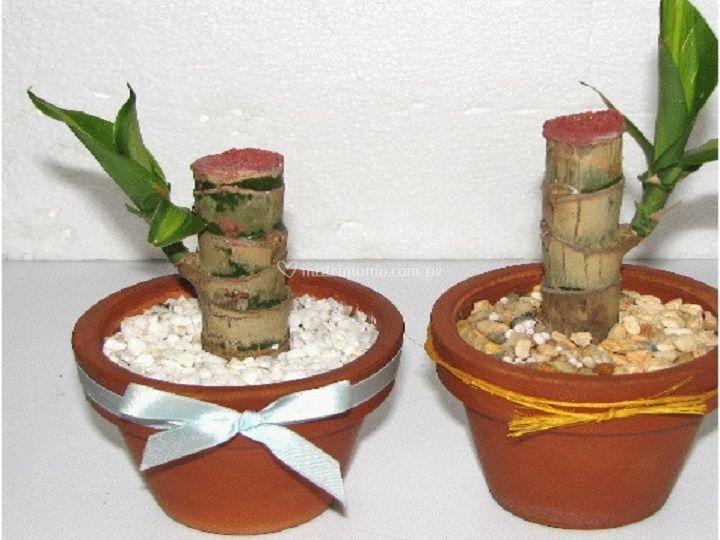 Bambus con maceta