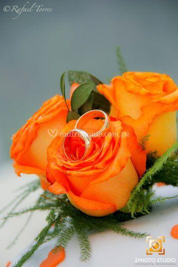 Anillos sobre rosas