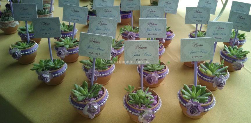 Suculentas en lila