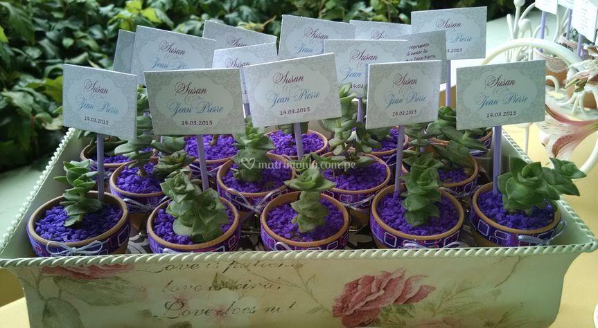 Suculentas decoradas