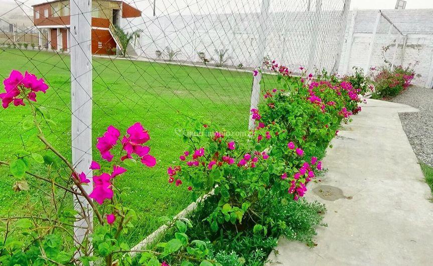 Pasadizo jardín