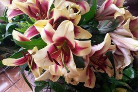 Valentina Diseño Floral