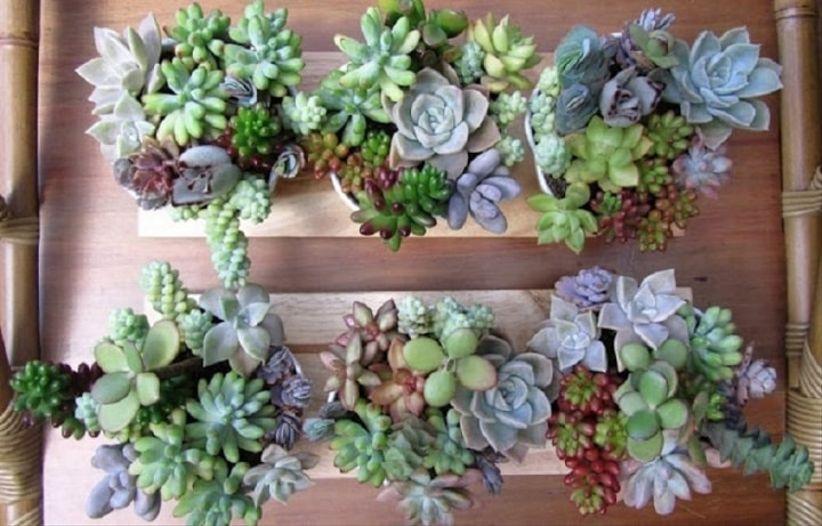 10 ideas originales para la decoraci n floral de tu matrimonio for Decoracion con plantas suculentas