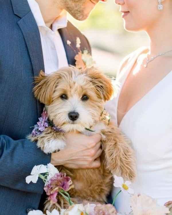 ¿Se tomarán fotos con tu mascota? - 1