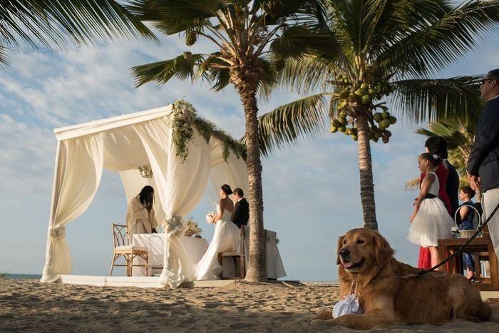 Especial bodas en la playa: Altares a orillas del mar 1