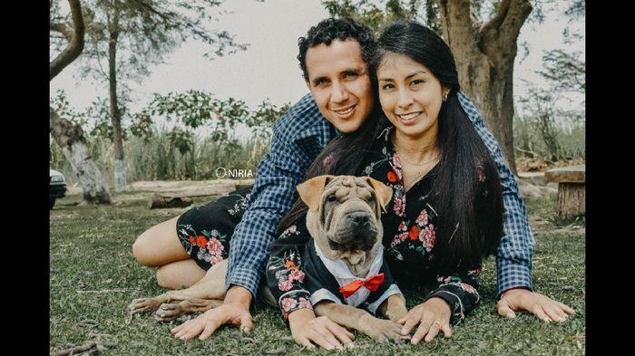Mascotas en el matrimonio: ¿A favor o en contra? 7