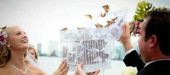 Liberación de mariposas masivo - 3