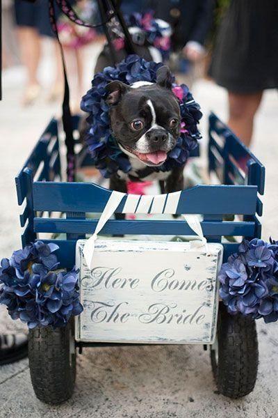 ya viene la novia, aquí viene la novia, ahí viene la novia