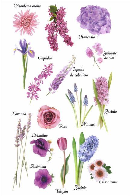 Tipos de flores moradas y lilas para tu bouquet - Clase de flores y sus nombres ...
