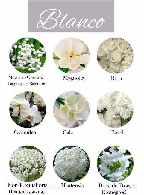 Tipos de flores blancas para tu bouquet - Todo tipo de plantas con sus nombres ...