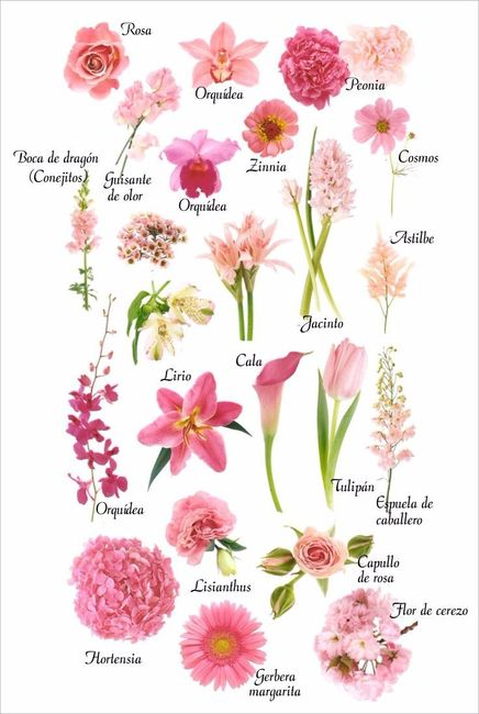 Tipos de flores rosa para tu boquet Nombres de plantas comunes
