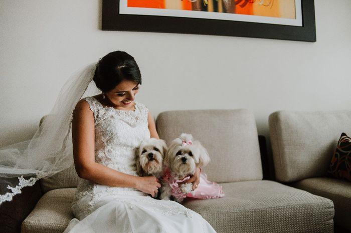 Mascotas en el matrimonio: ¿A favor o en contra? 3