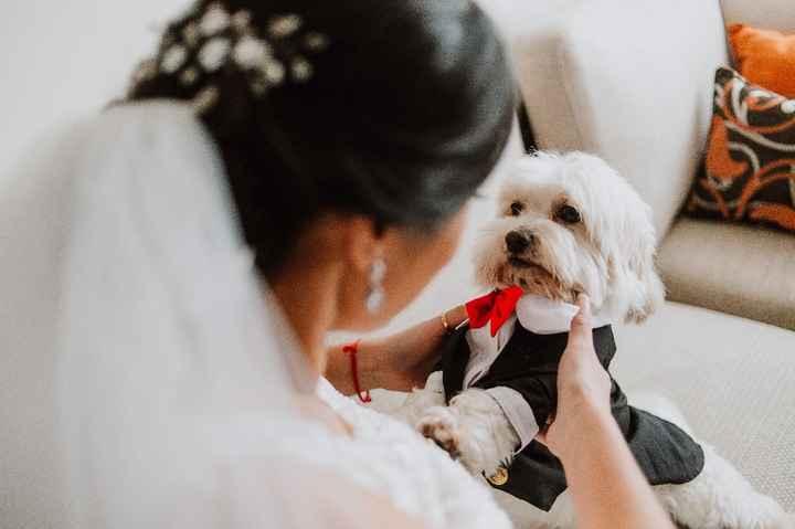 Mascotas en el matrimonio: ¿A favor o en contra? - 2