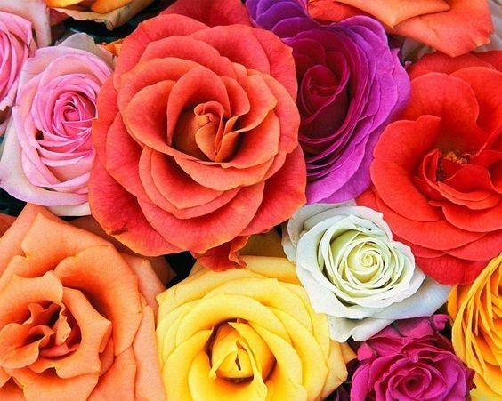 ¿Cuál será el color de tu matrimonio? 1