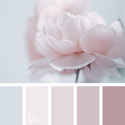 ¡Paleta de colores con ROSA! 🌈 1