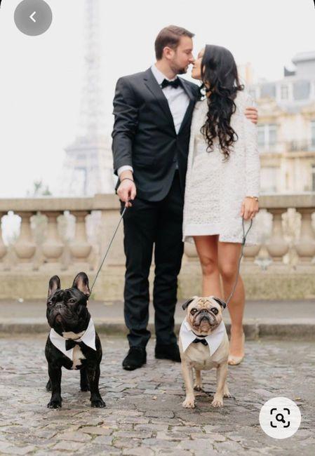 Sesión de foto con tus mascotas 6