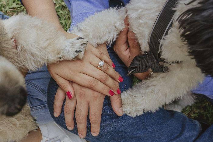 🐶 Fotos de boda con tu engreído: 10 momentos ideales - 1