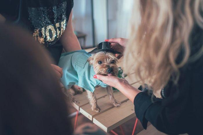 ¿Cómo vestirían a sus mascotas en el día B?📸 1
