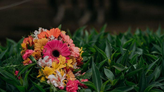 ¿Qué flores te gustan más? 1