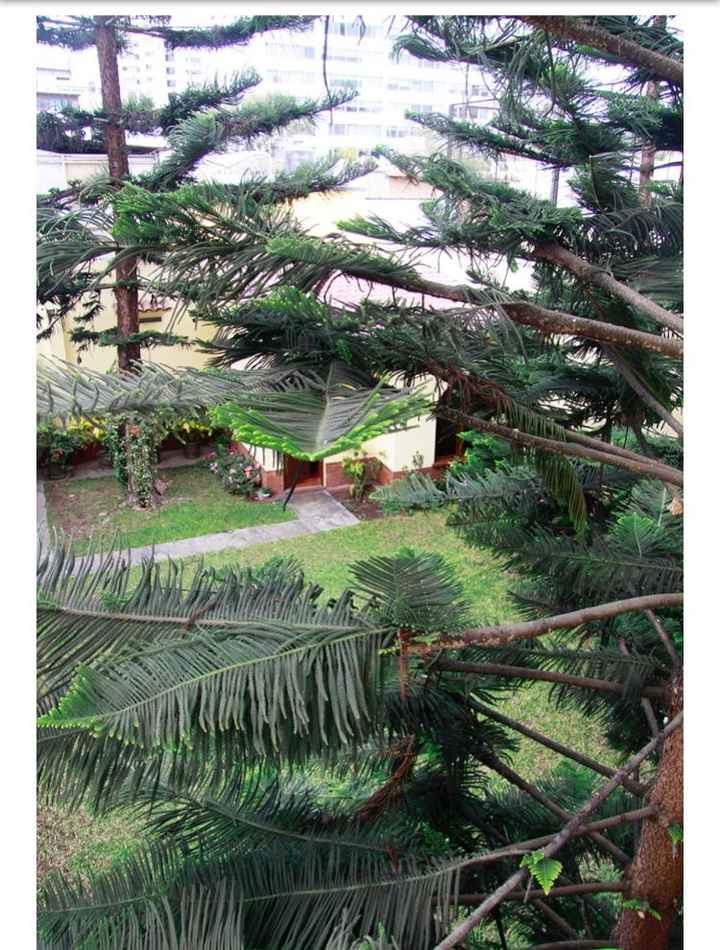 Vista desde arriba del jardín