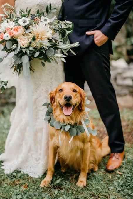 Mi mascota en mi boda 👰🏻 🐶 🐱 - 3