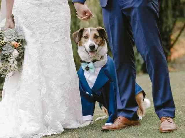 Mi mascota en mi boda 👰🏻 🐶 🐱 - 4