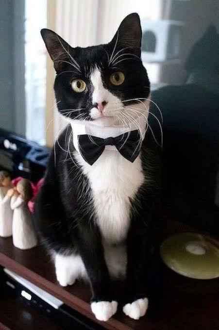 Mi mascota en mi boda 👰🏻 🐶 🐱 - 7