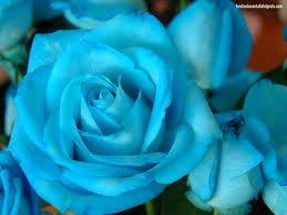 Significado de las flores de tu bouquet - 1